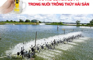 Vai trò của chỉ số pH trong nuôi trồng thủy hải sản