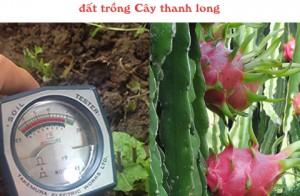 Với cây thanh long độ pH nào là hợp lý và cách cải thiện pH đất
