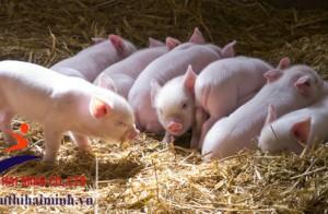 5 lợi ích của máy ép cám viên trong chăn nuôi