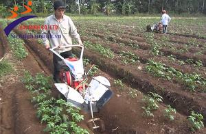 Máy xới đất giá tốt, hàng chính hãng tại Siêu thị Hải Minh